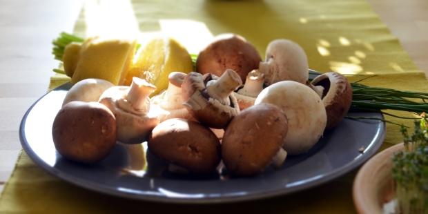 champignons_weis_braun